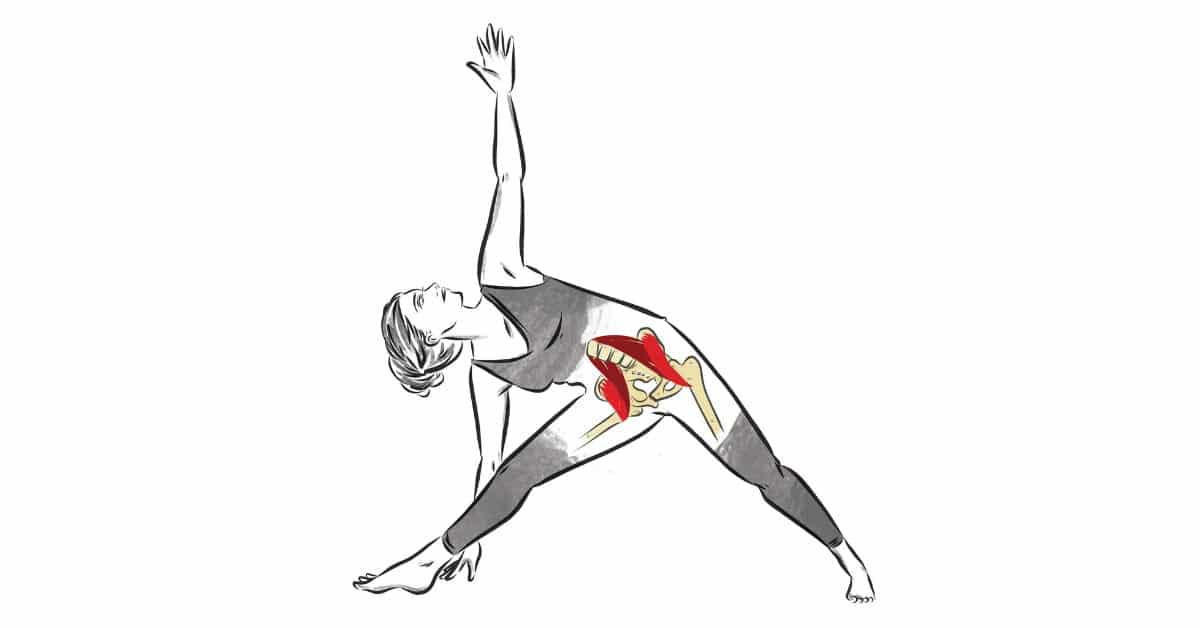 Ultimate Guide to the Iliopsoas: What it does, why it hurts, and what to do about it